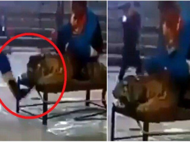 Indignante: hombres maltratan a tigre en circo [VIDEO]