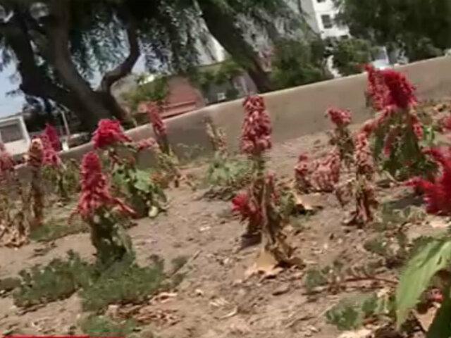Denuncian falta de mantenimiento en parques de Miraflores
