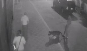 Trujillo: perro ataca a pareja de esposos en varias oportunidades
