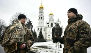 Rusia: águilas y búhos resguardan invernaderos del kremlin