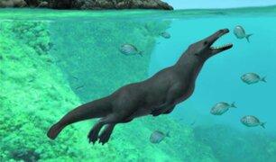 Hallan restos de una ballena de cuatro patas en la costa del Perú