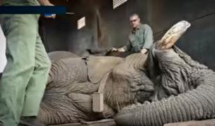Sudáfrica: activistas salvan a elefante de la pena de muerte [VIDEO]
