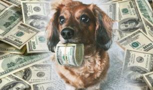 Animales afortunados: mascotas reciben jugosas herencias cuando sus amos dejan este mundo