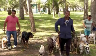 Encantadores de perros: expertos adiestran a mascotas con problemas de conducta