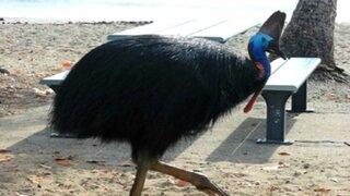 Una de las aves más peligrosas del mundo mató a su dueño con un golpe letal