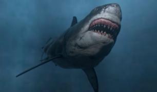 Niña encuentra diente de tiburón prehistórico en una playa