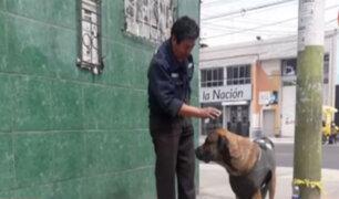 Arequipa: perro conmueve por esperar en la calle a su amo fallecido