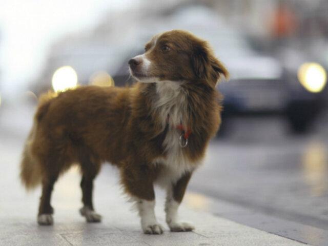 Plantean proyecto para que esterilización de mascotas sea política de salud pública