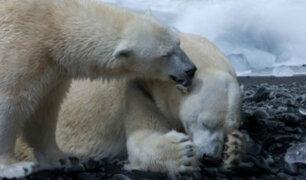 ONU: un millón de especies están en peligro de extinción