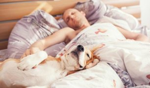 Dormir con tu mascota podría mejorar la calidad de tu sueño
