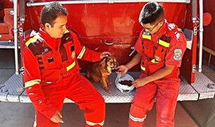 Cusco: bomberos rescatan y adoptan a perro que fue lanzado a río