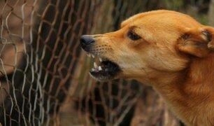 Mujer muere al contraer rabia de perro que rescató