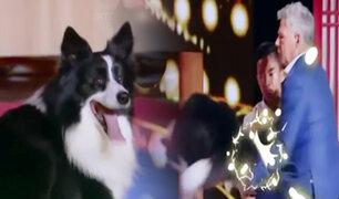 """China: perro demostró ser """"experto"""" en artes marciales durante programa de talentos"""