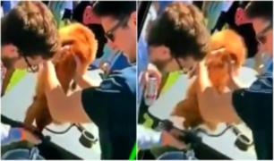 Jóvenes obligan a perro a tomar cerveza de cabeza