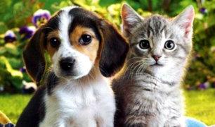 Australia reconocerá a los animales como seres sensibles y con sentimientos
