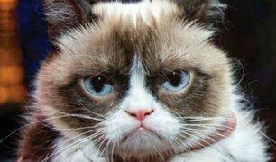 Grumpy Cat: murió la gatita más famosa de Internet