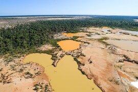 """Desaparición de bosques avanza de forma """"devastadora"""", advierten científicos"""