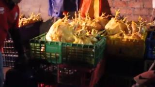 Clausuran local en SMP donde inflaban y pintaban pollos para la venta