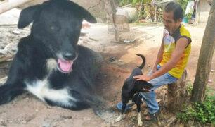 Tailandia: perro rescata a un bebé enterrado vivo por su madre
