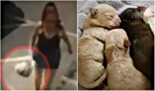 Mujer arroja media docena de cachorros a la basura