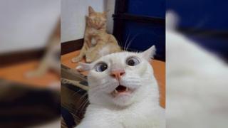 Joven olvida su celular en casa y sus gatos se toman hilarantes 'selfies'