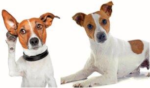 ¿Por qué los perros mueven la cabeza cuando les hablan?