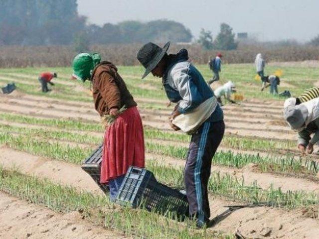 Congreso: Pleno no llegó a un acuerdo sobre ley de Régimen laboral agrario