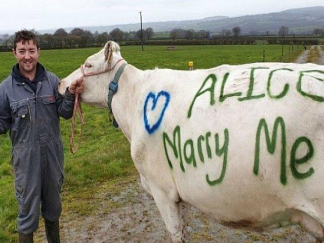 Hombre pintó una vaca para proponerle matrimonio a su novia