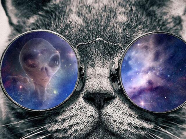 ¿Son los gatos espías enviados por seres de otros mundos?