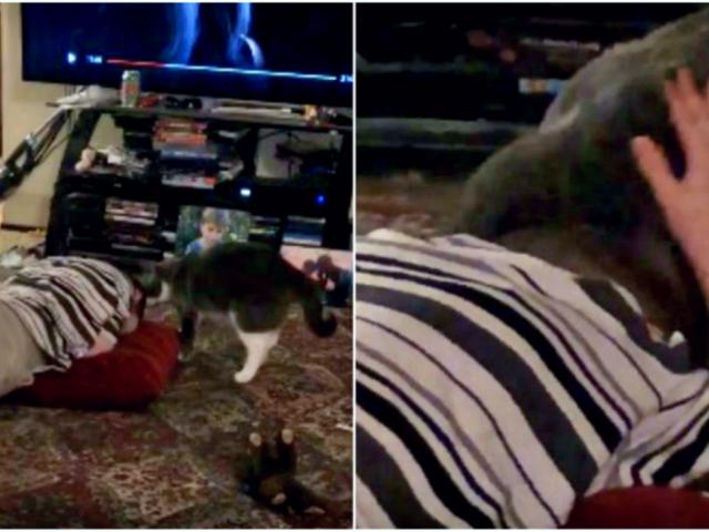 Gato ayuda a controlar la crisis nerviosa de un niño [VIDEO]