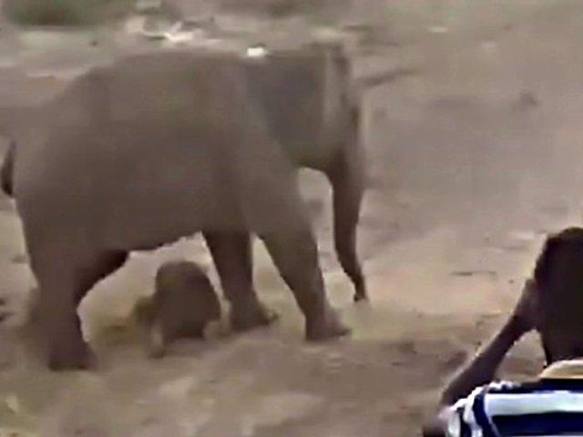 Elefante asesina a hombre que fotografiaba el cadáver de su cría