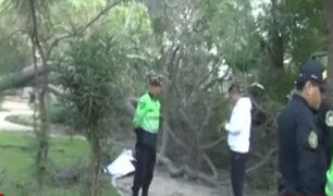 Chaclacayo: hombre fallece aplastado por un árbol