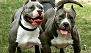 Dos perros atacaron a ladrón que intentó robar en casa