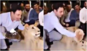 VIDEO: hombre lanza torta en la cara de leona