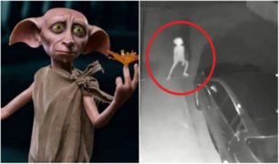 Captan extraña criatura similar a Dobby de Harry Potter