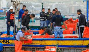 Decomisan 3 toneladas de pota pescada ilegalmente en Lima