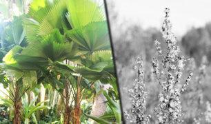 Plantas se están extinguiendo a un ritmo nunca antes visto, alertan científicos