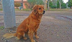 Conoce al perro que lleva más de un año esperando a su dueño en puerta de comisaría