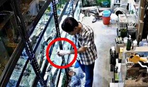 Hombre es captado envenenando decenas de peces en tienda de mascotas