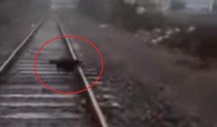 VIDEO: atan perro a vías del tren y maquinista se detiene para liberarlo