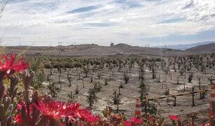 """Chile: científico crea """"desierto verde"""" para frenar calentamiento global"""