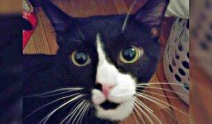 Un gato sobrevivió 35 minutos dentro de una lavadora