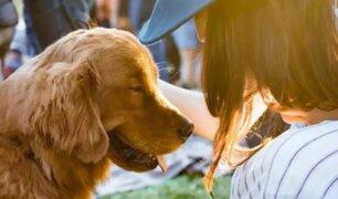Empresa dará un día de licencia a sus trabajadores por fallecimiento de mascotas