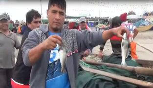 Cerro azul: pescadores revelan las bondades curativas del cebiche