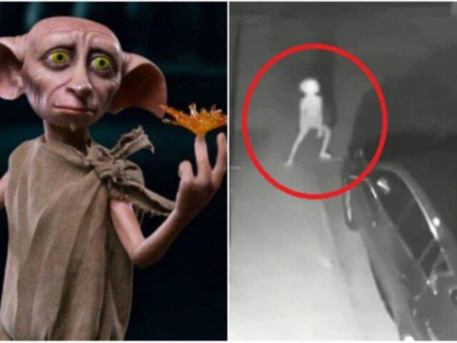 Captan extraña criatura similar a Dobby de Harry Potter