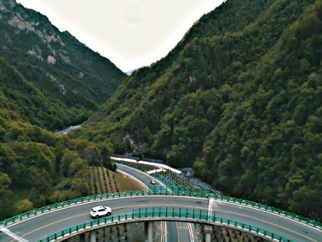 Mega autopista fue construida en bosque sin cortar un solo árbol