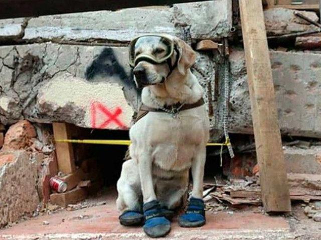 México: Frida, la can rescatista, se retira luego de nueve años de labor