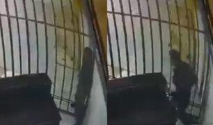 Bolivia: ladrón escapa entre los barrotes de su celda, gracias a su delgadez