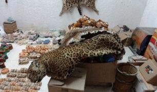 Brasil: detienen a cazador acusado de asesinar más de mil jaguares