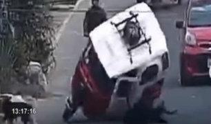Ica: perro choca con motaxi y vehículo se voltea